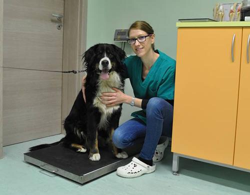 Nasveti-veterinarja
