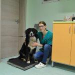 Nasveti veterinarja